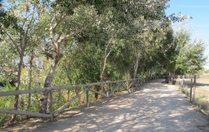 Limpieza del sendero peatonal del Arroyo de los Toreros